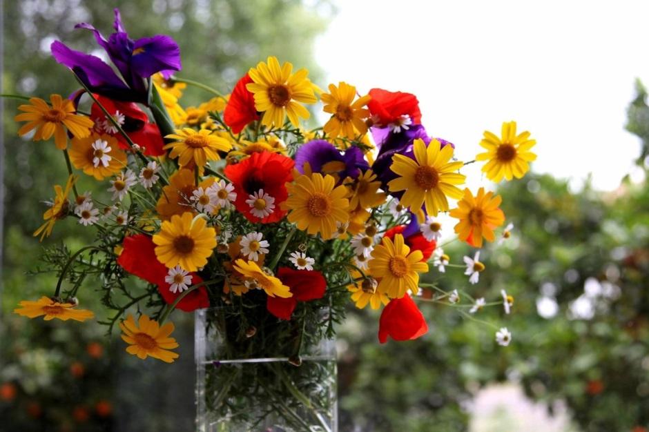 долго цветущие цветы