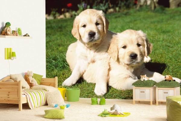 веселые щенки