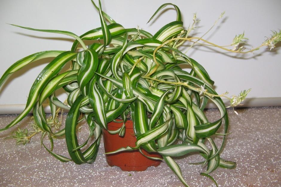 Самые неприхотливые комнатныкомнатные растения для начинающих