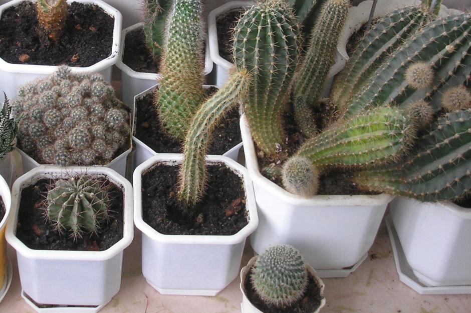 Самые неприхотливые комнатные растеникомнатные растения для начинающих