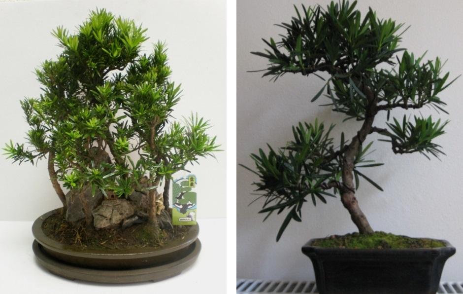 Самые неприхотливые комнатные растения – фото и советы по уходу