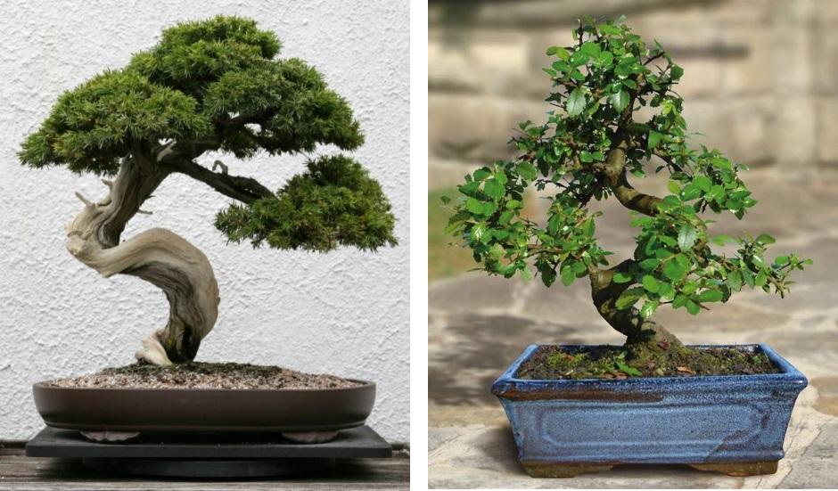 Самые неприхотливые комнатные растения – комнатные растения для начинающих