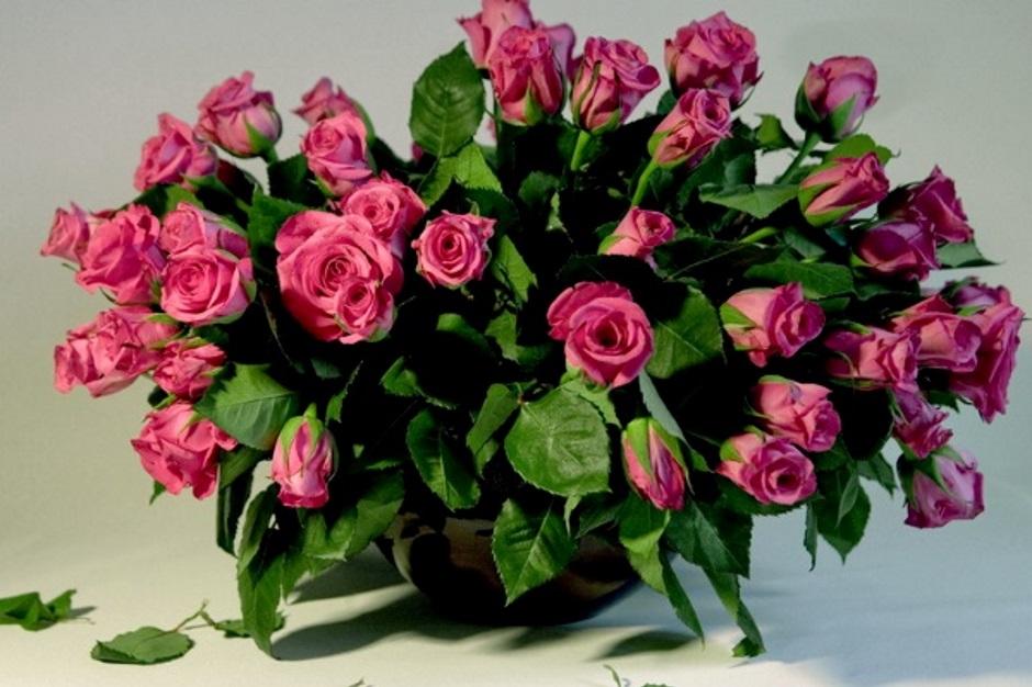 Как вырастить куст розы из стебля