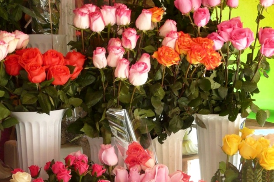 импортные розы не пригодны для черенкования