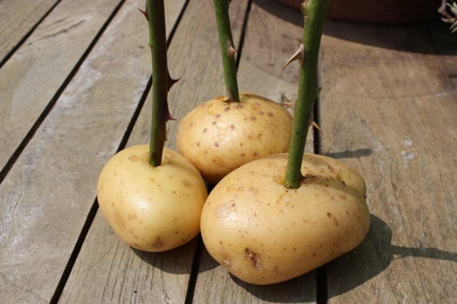 идея с картошкой