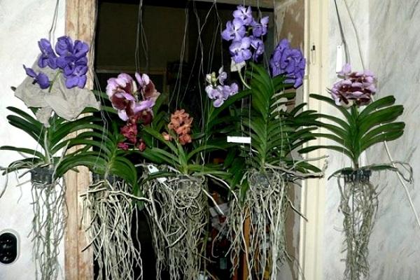 орхидея как за ней ухаживать фото