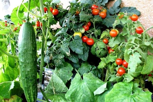 выращивание овощей в квартире