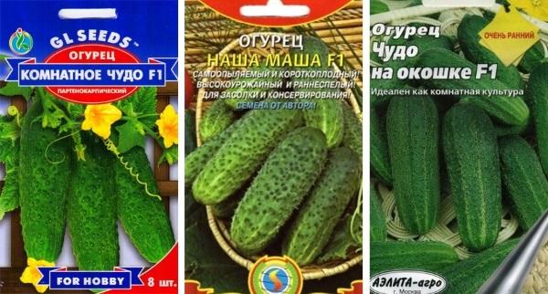 лучшие семена для домашнего применения