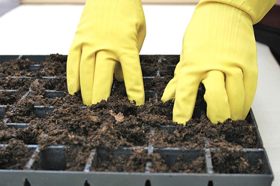 грунт для выращивания рассады