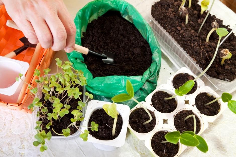 Грунт для выращивания рассады: как приготовить землю самостоятельно?