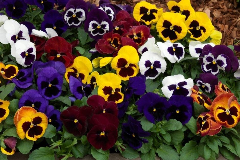 посев цветов февраль