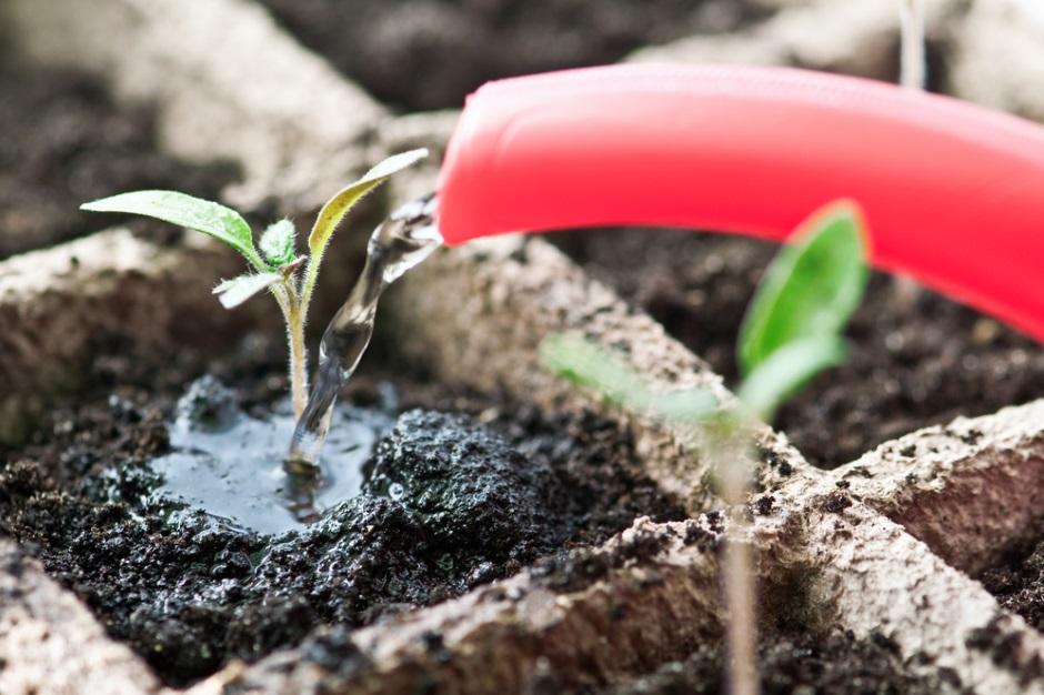 выращивание семян дома