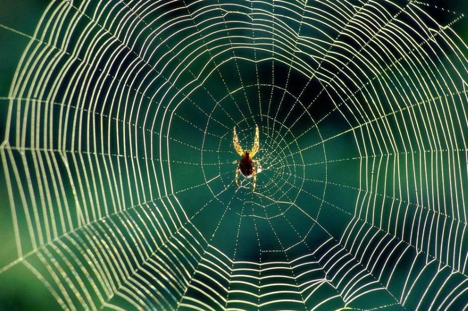 Как избавиться от пауков в доме