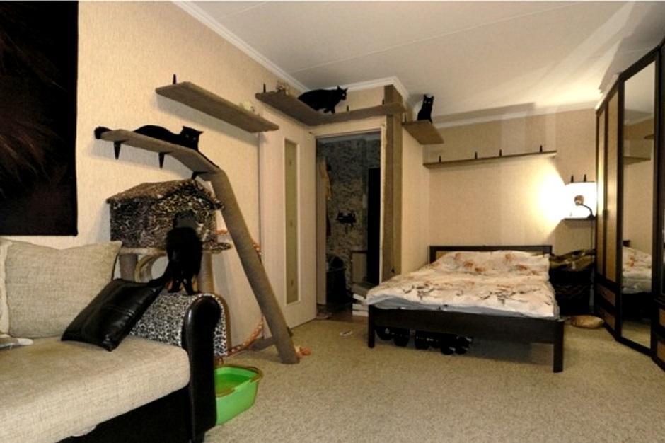 элементы мебели для кошек и котов