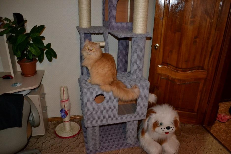 бывают и воспитанные коты