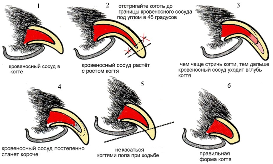 этапы подстригания когтей