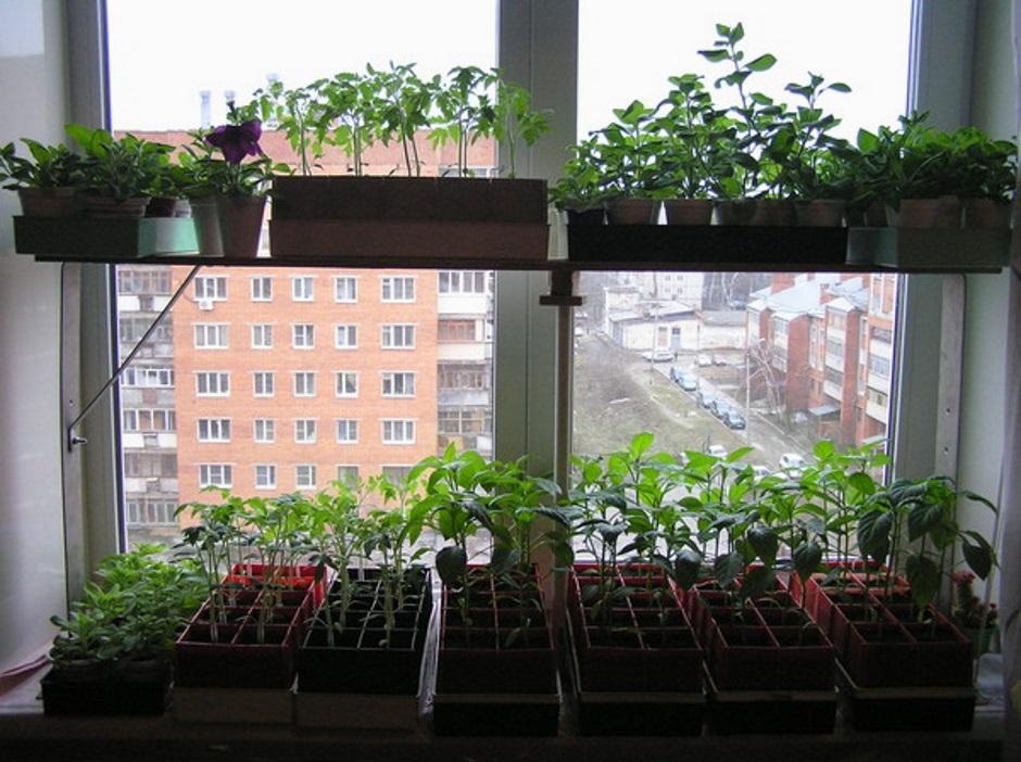 оборудование окна под ящики с рассадой