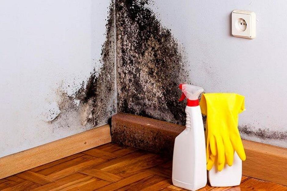как бороться с сыростью и плесенью в доме