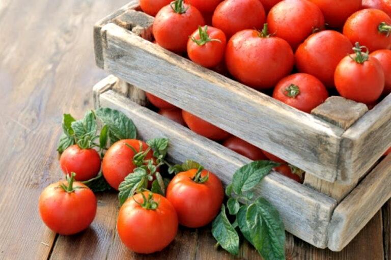 Как ухаживать за томатами после высадки рассады в открытый грунт